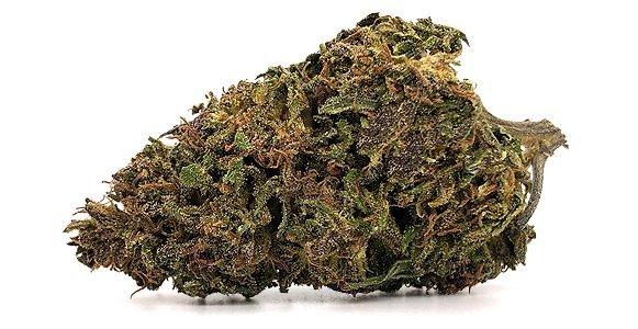hawiian-haze-cbd-bud-strain
