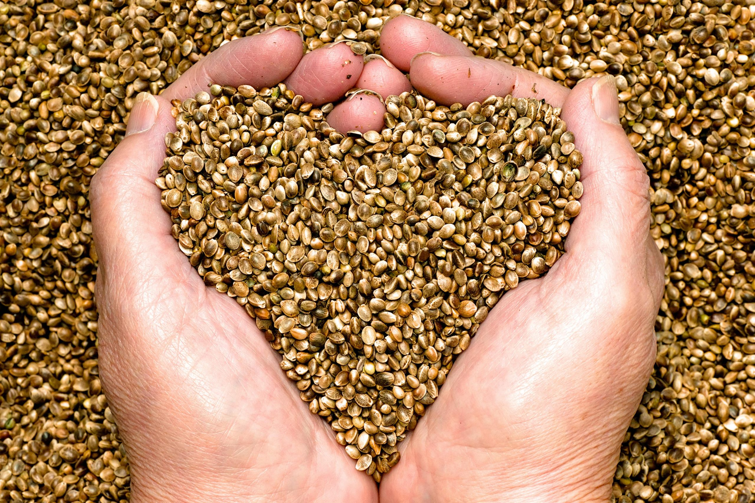 hemp-seeds-person-hands-min